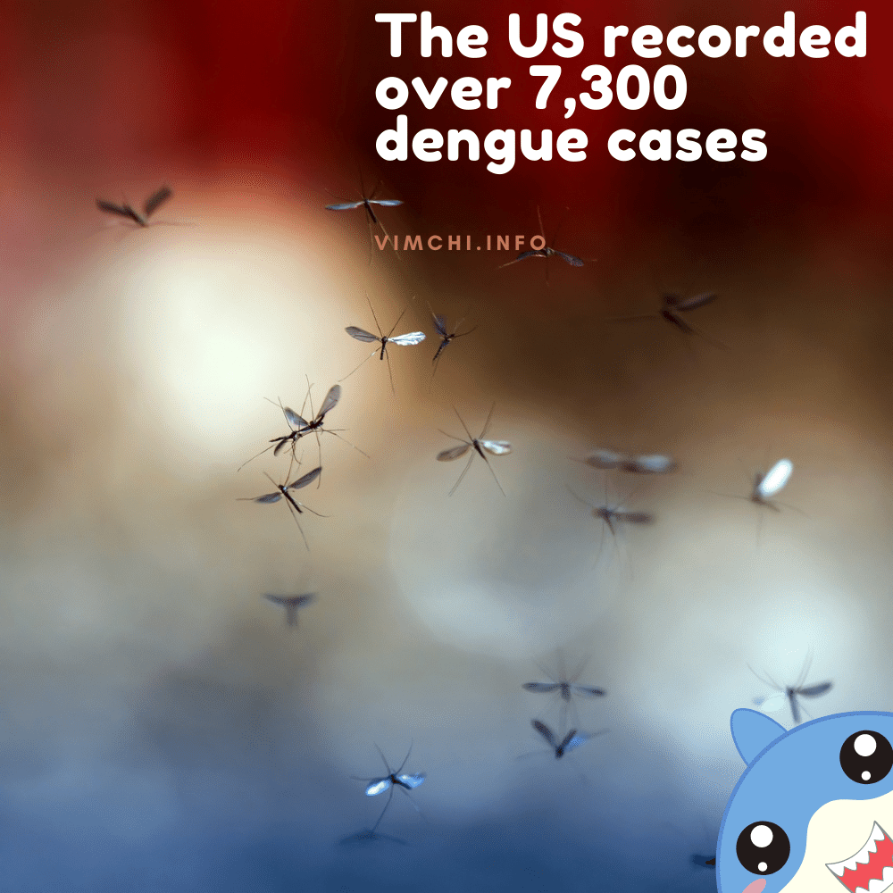 genetically modified mosquitoes to fight dengue