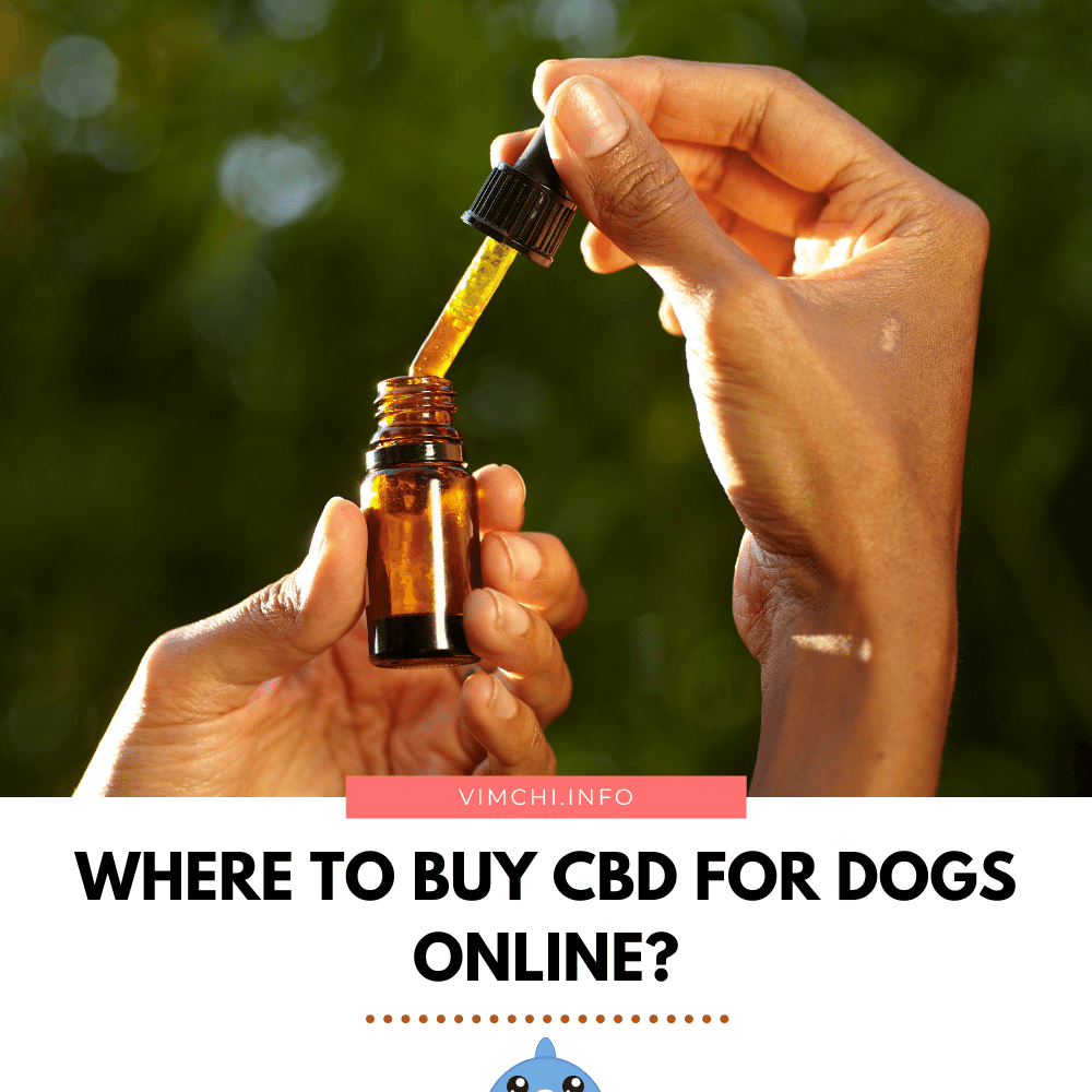 where to buy CBD for dogs online